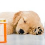 prednisone side effects in dogs